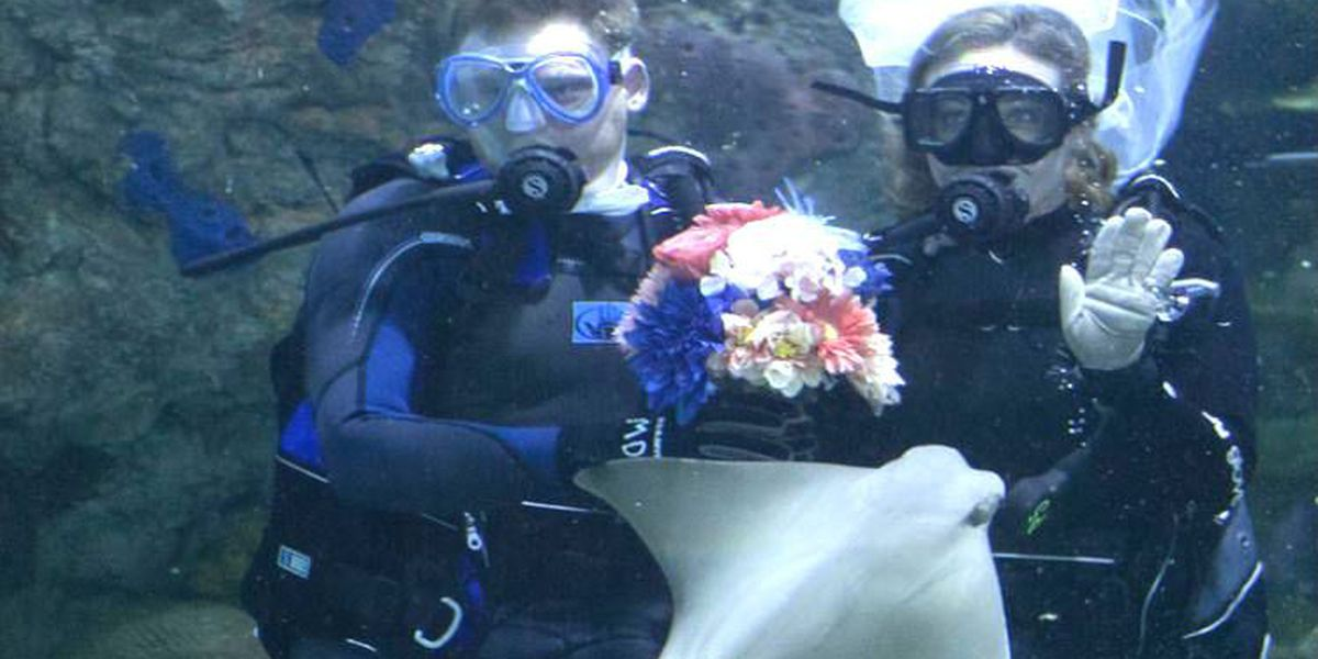 Couple weds among the fishes at Aquarium of the Americas