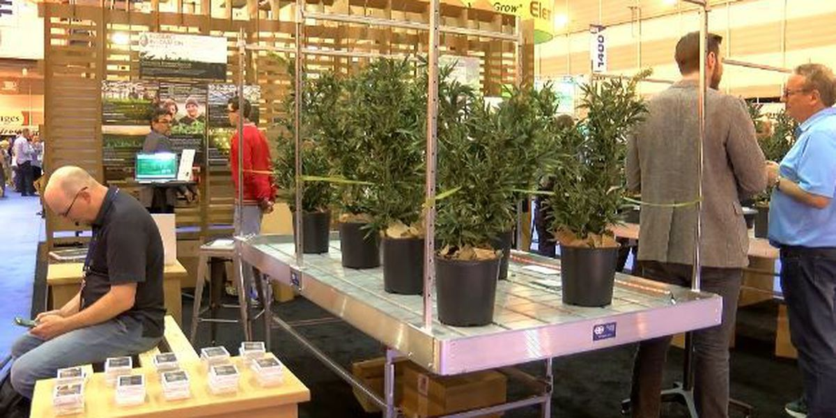 Medical marijuana industry could see increase with bill expansions