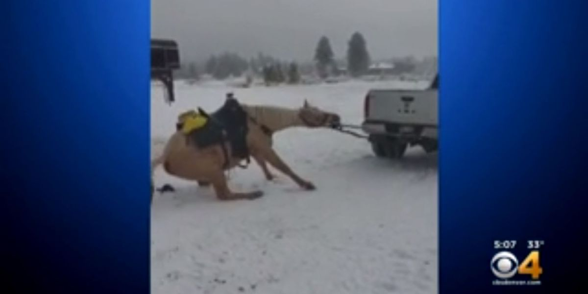 Owners of horse pulled behind truck charged with animal cruelty