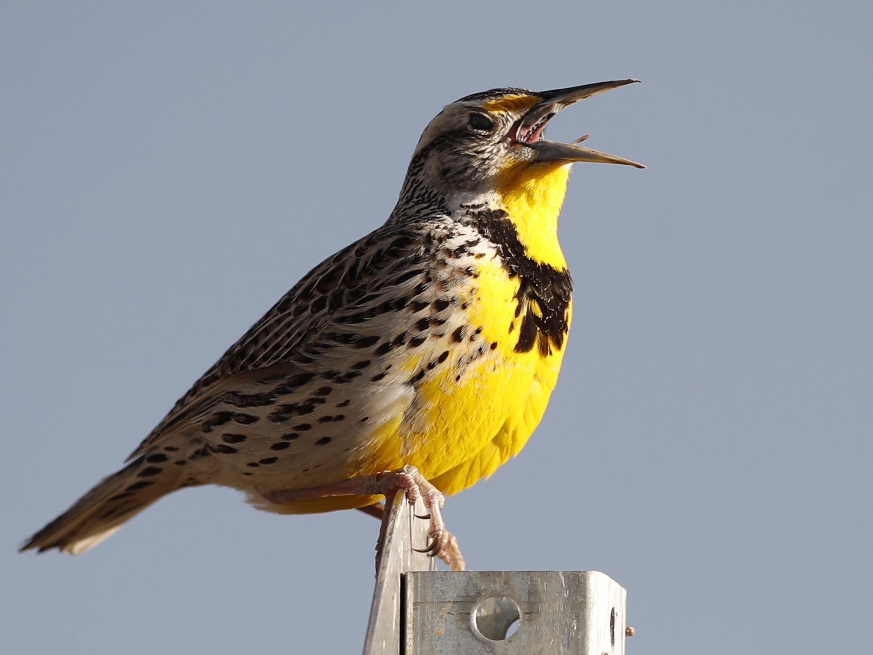 Where have the wild birds gone? 3 billion fewer than 1970