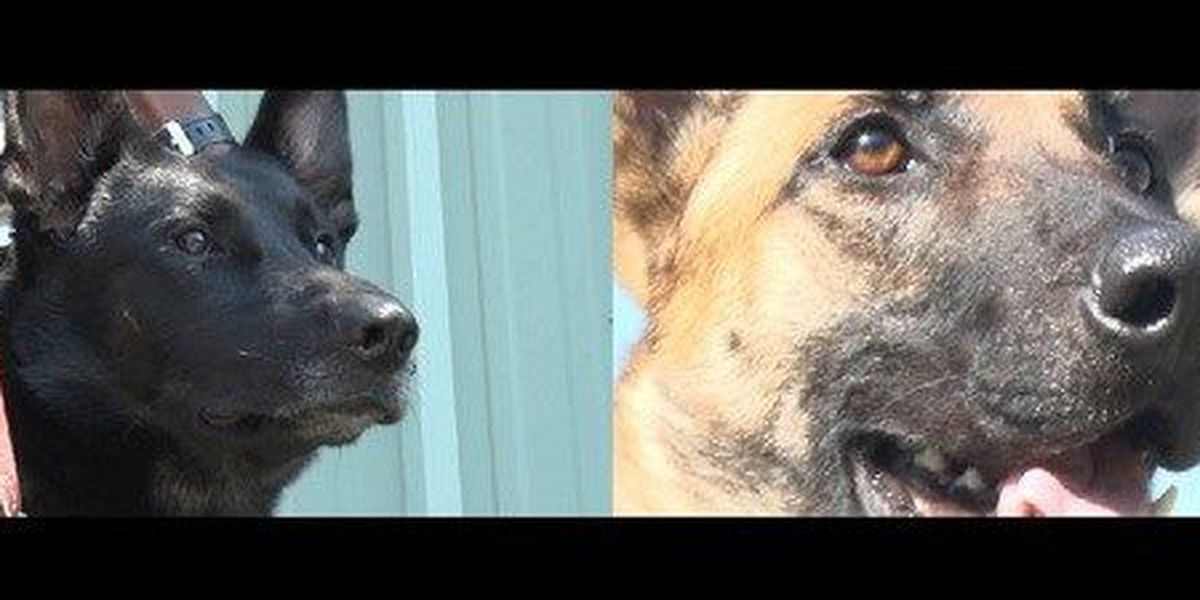 NOPD welcomes two new K9s to force