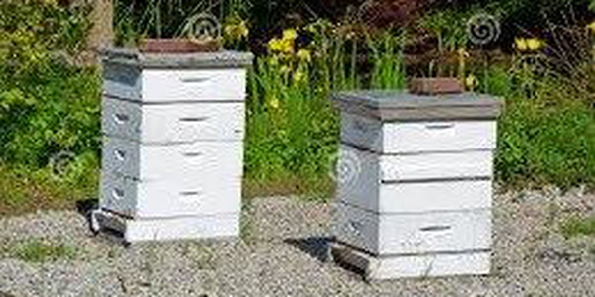 Police investigating theft of bee boxes in Tangipahoa Parish
