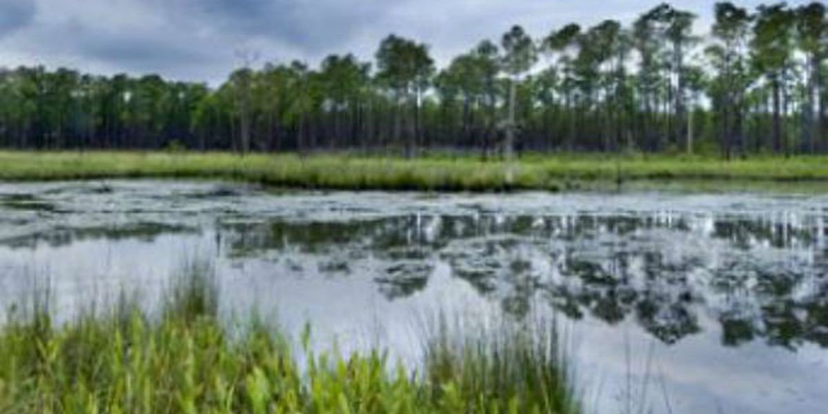 Wildfire reported in Big Branch Marsh National Wildlife Refuge