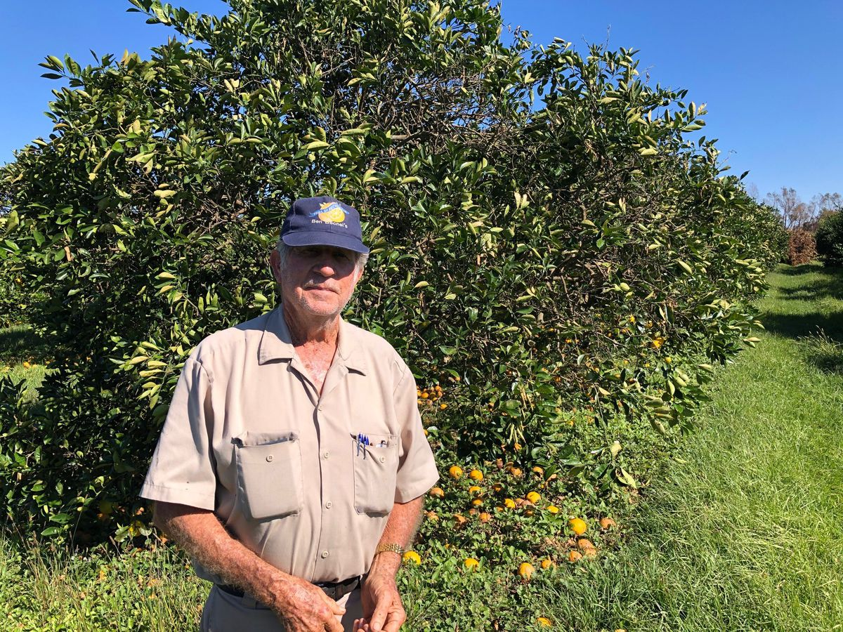 Plaquemines Parish growers reboot after Hurricane Zeta
