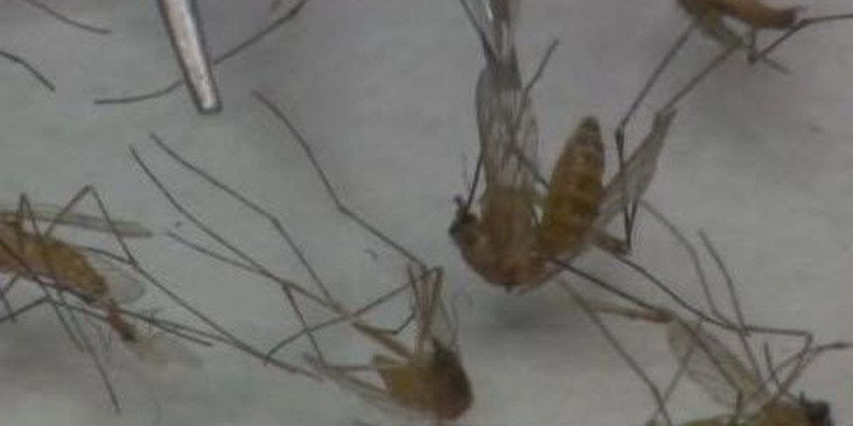 Health Department: Louisiana has highest rate of West Nile