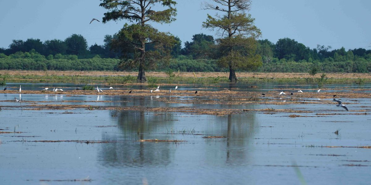 Update: Plaquemines Parish plugs a breach in a west bank levee