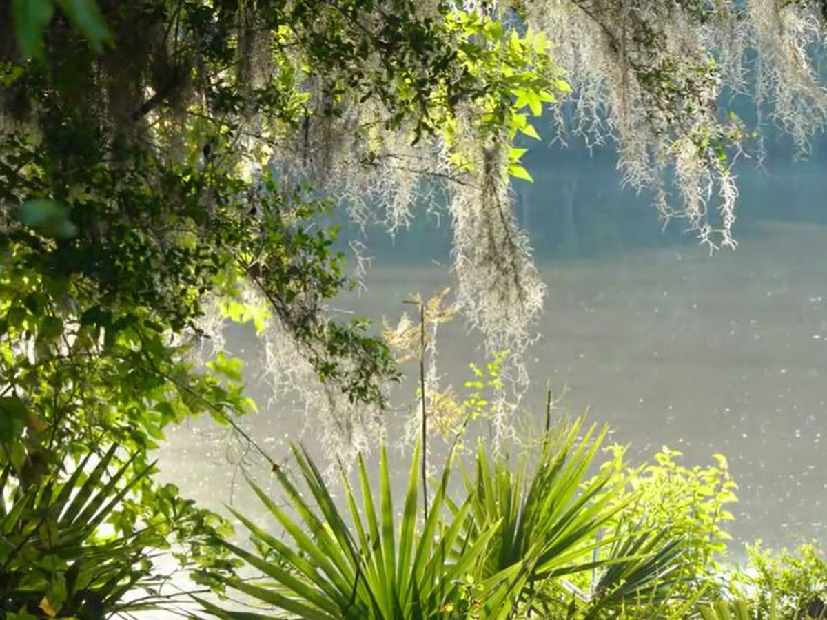 Heart of Louisiana: Palmetto Island State Park