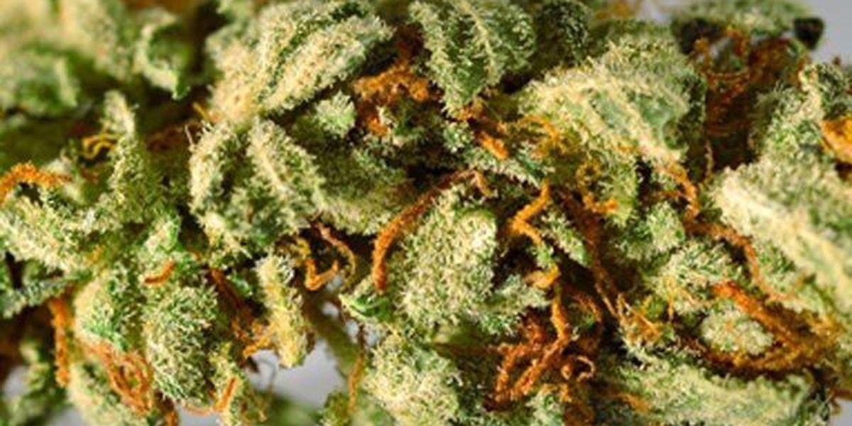 Recreational marijuana bill not dead in Louisiana Legislature