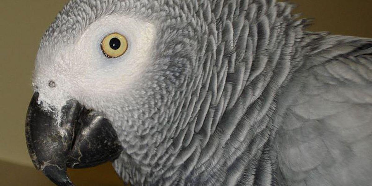 Parrot missing for years returns speaking Spanish