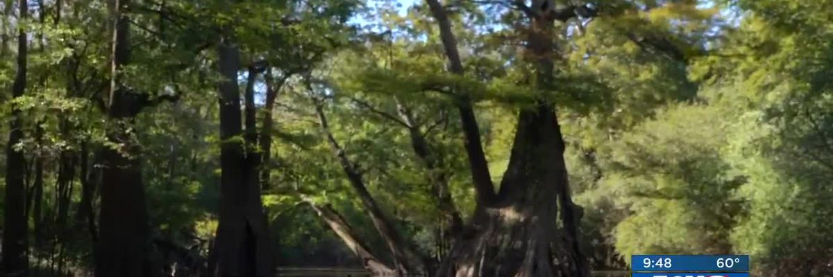 Heart of Louisiana: Castle Trees