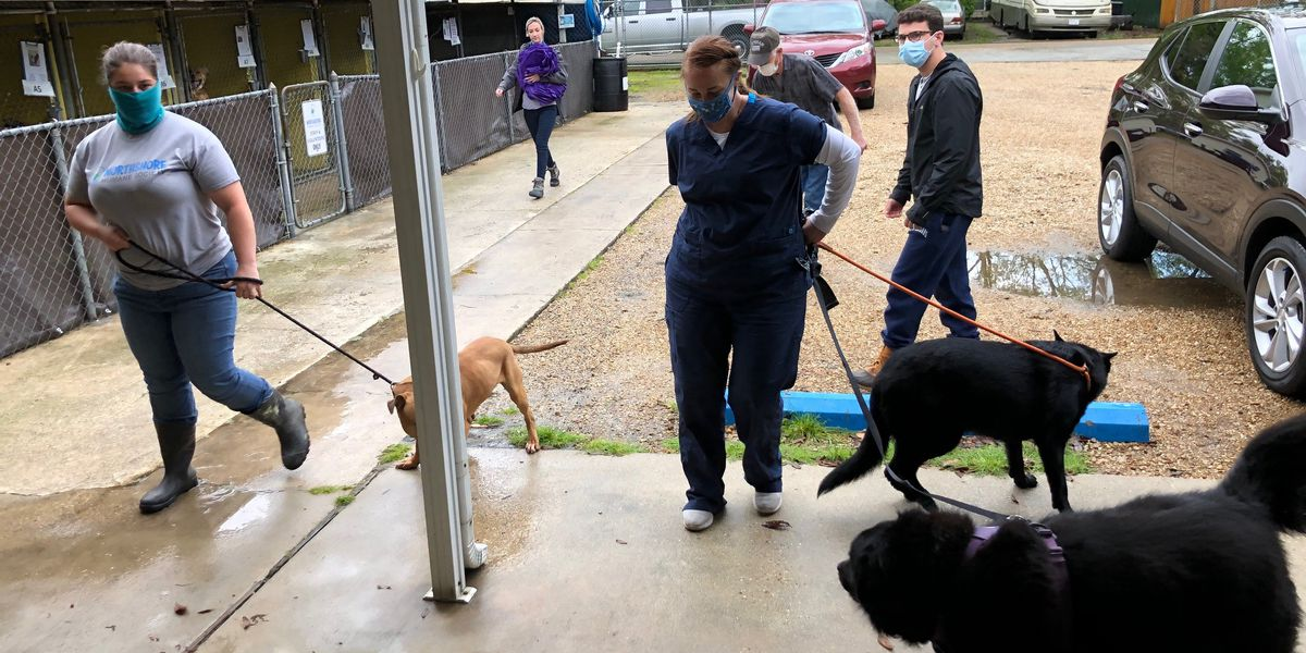 Flooding prompts Northshore Humane Society to call for help
