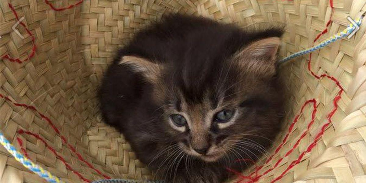 Kitten near death rescued by detective