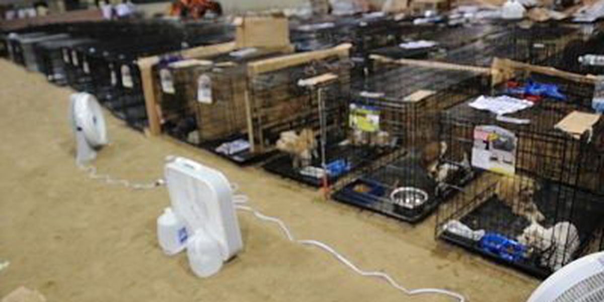 More than 1,200 animals being cared for at Lamar Dixon Expo Center