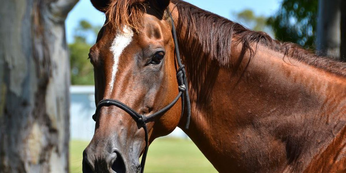 Vets find healing with horse therapy