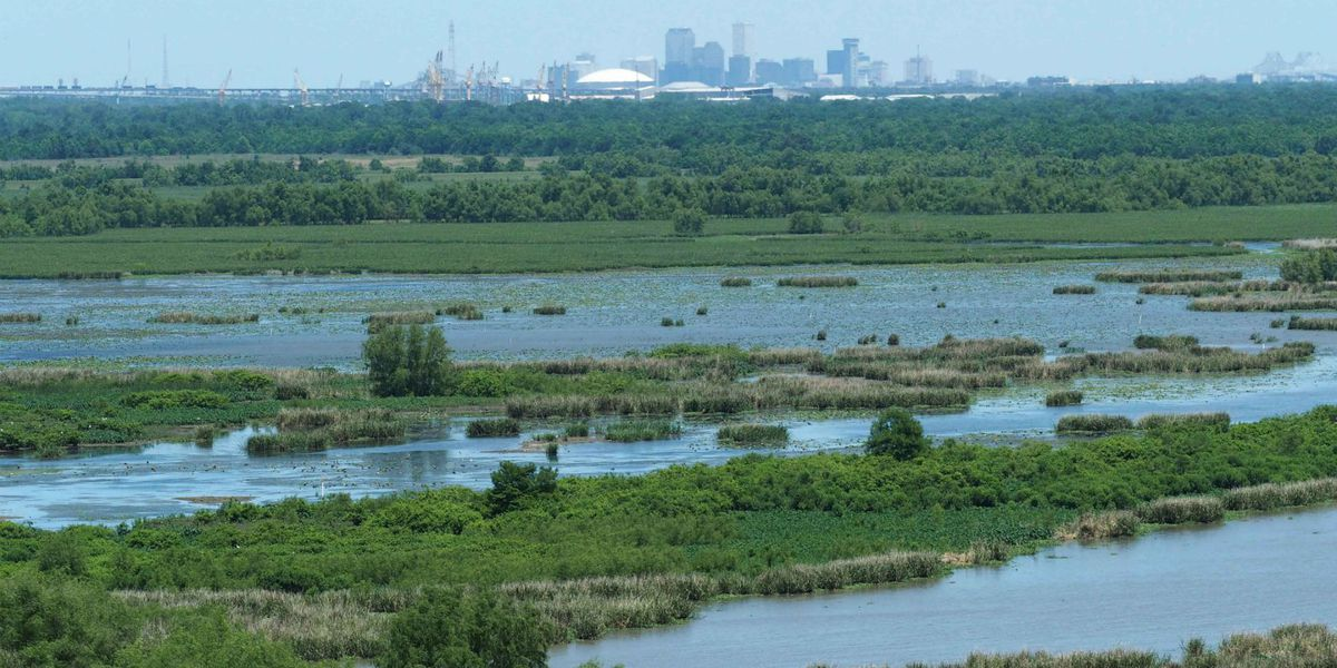Coast in Crisis: Are laws designed to protect the environment slowing efforts to restore Louisiana's coast?