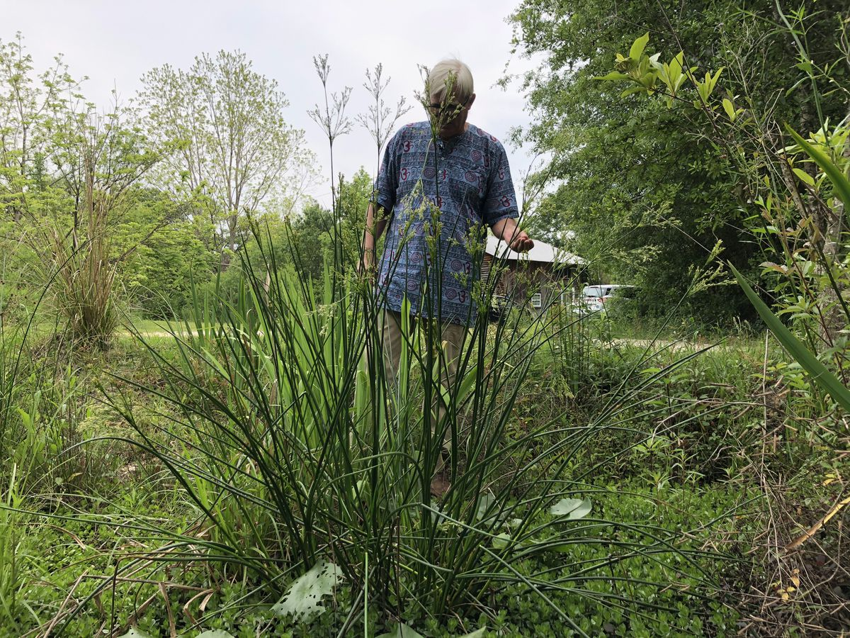 Discovering herbal medicine in South Mississippi