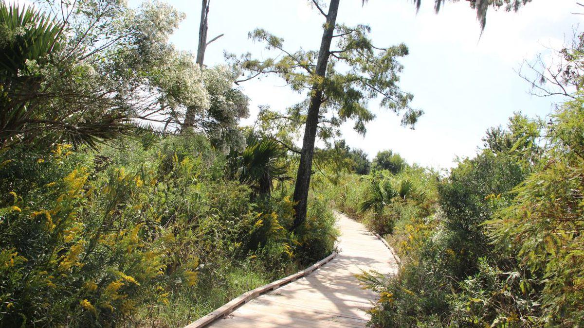 Gr8 Neighbors: Wetland warrior is a voice for coastal protection