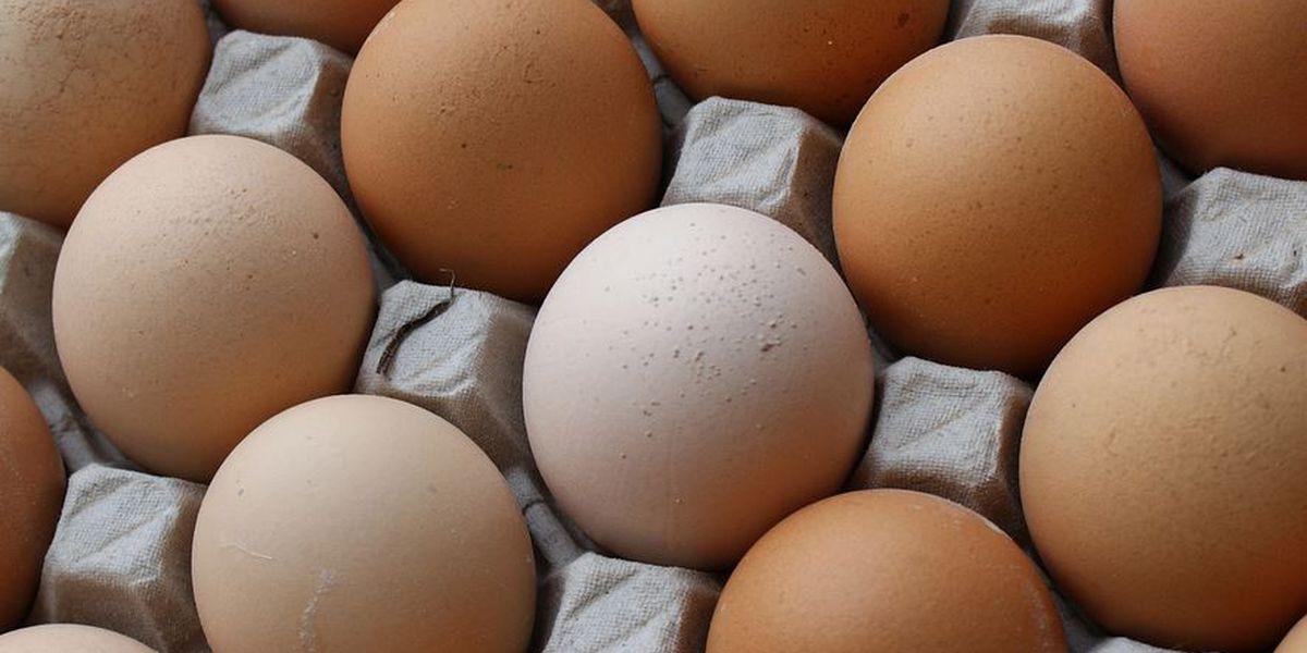 Rising egg prices the result of deadly avian virus