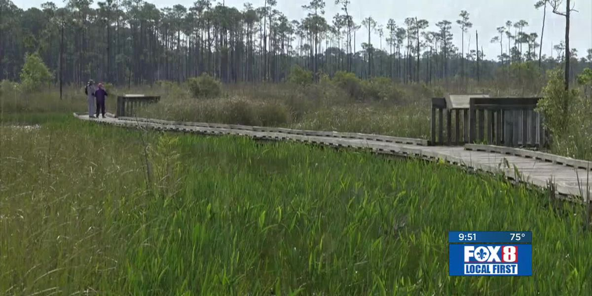 Heart of Louisiana: Big Branch National Wildlife Refuge