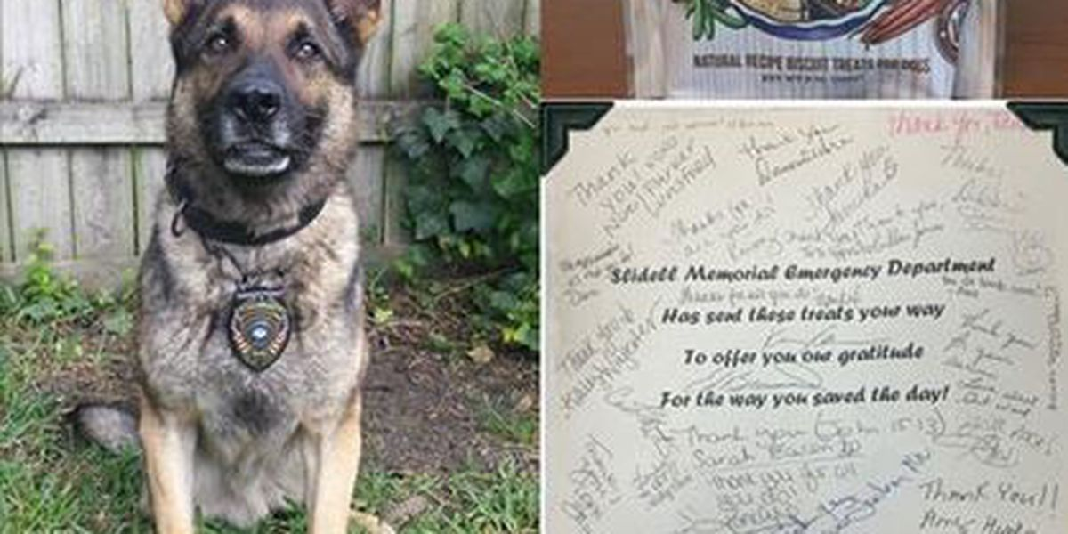 After shooting and apprehension in Olde Town, Slidell K-9 Scout is back on the job