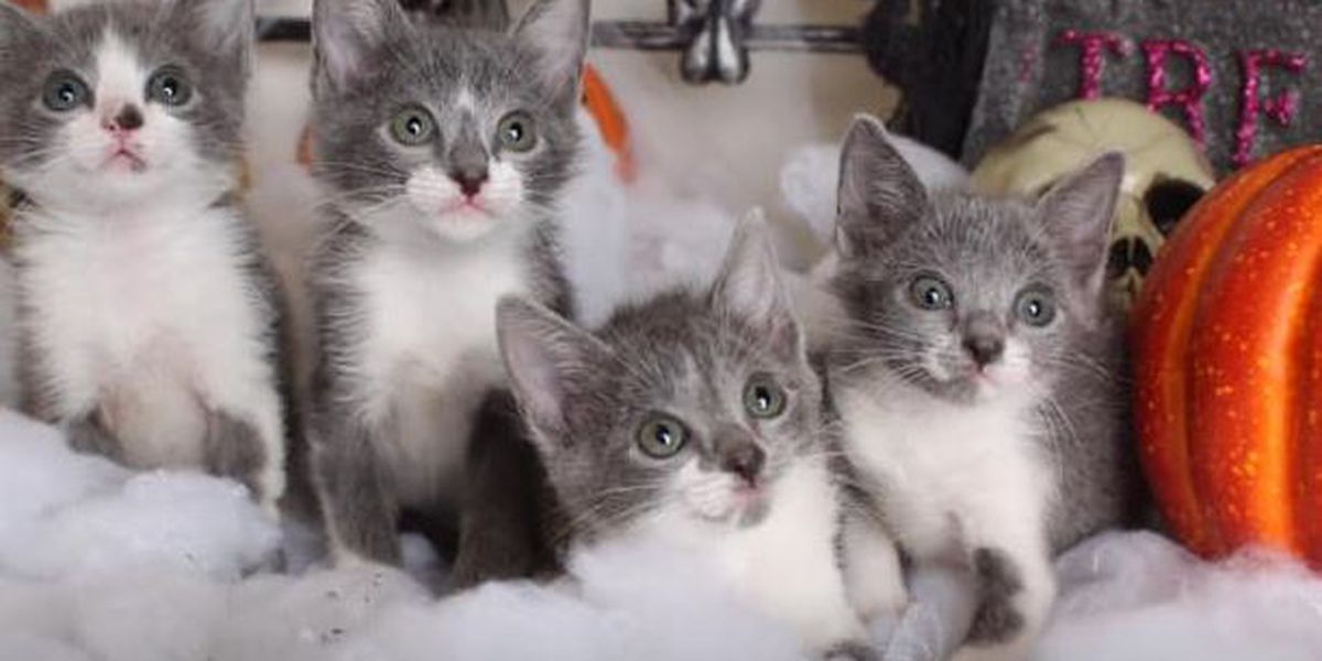 Animal shelter seeks homes for kittens named after FOX 8 anchor Nancy Parker and her family