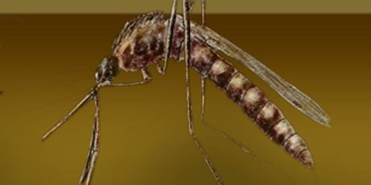 West Nile detected in mosquitoes in Orleans Parish