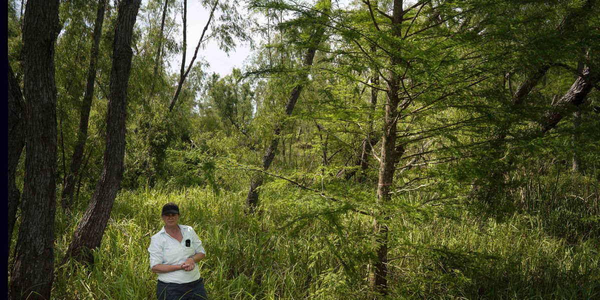 One tree at a time, volunteers and activists grow a new forest of Louisiana cypress trees