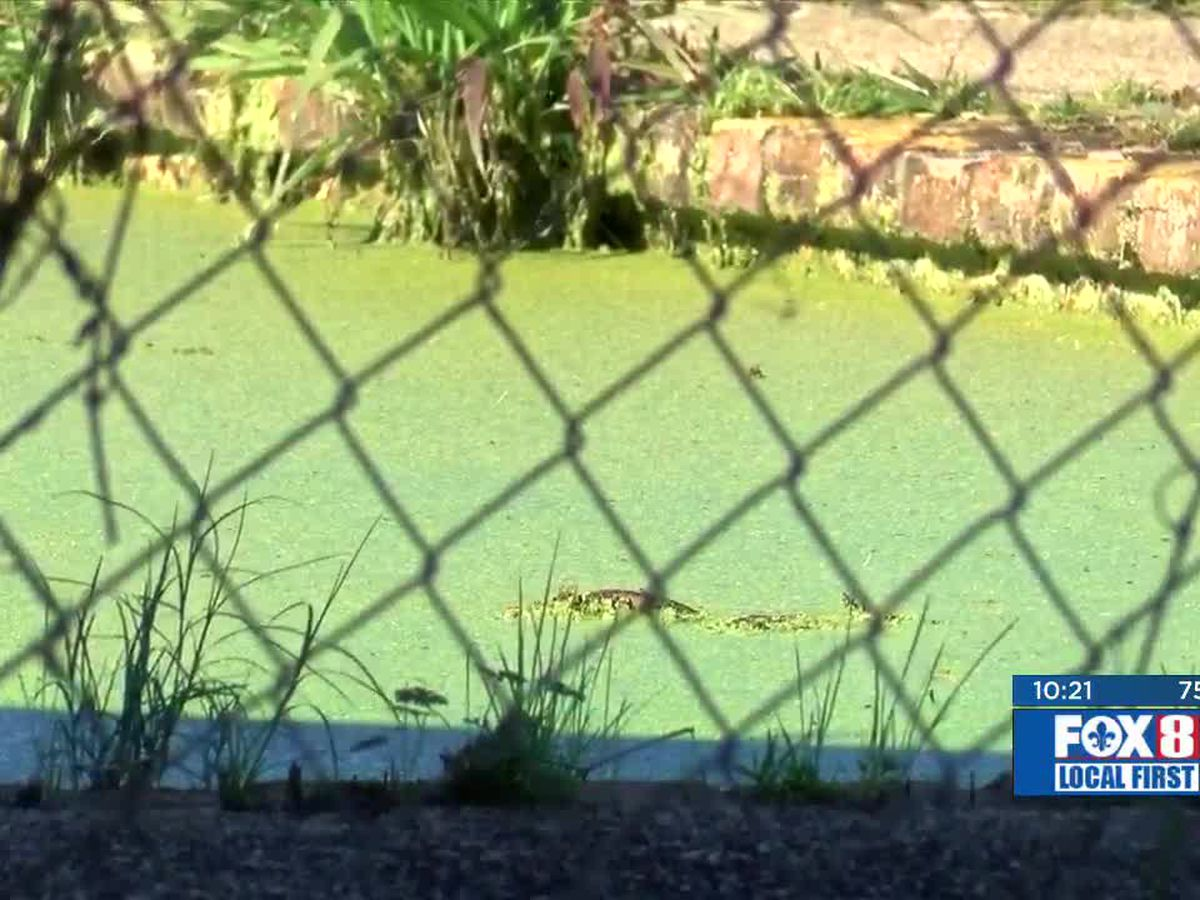 FOX 8 Defenders: Plaquemines Parish crews fill two longtime nuisance pools