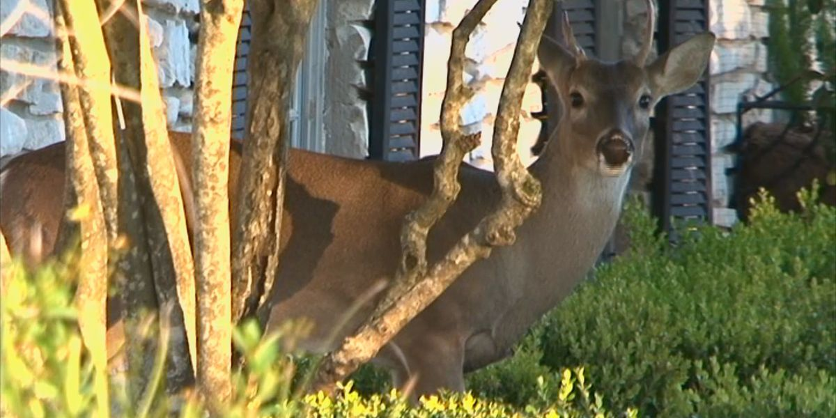 Changes coming for deer hunters as Chronic Wasting Disease continues in the state