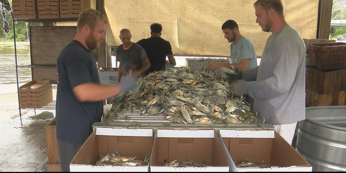 St. Bernard Parish leaders appeal for federal disaster relief money for fishermen
