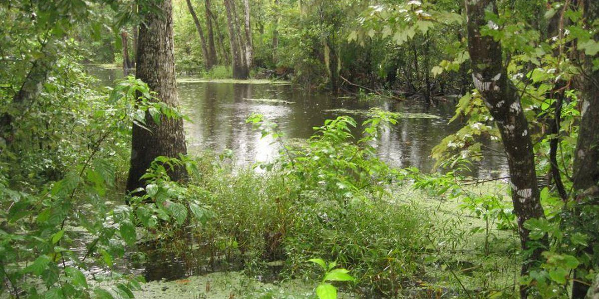 Heart of Louisiana: Jean Lafitte National Historical Park