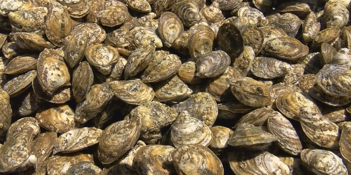 La. Health Dept. closes some oyster beds due to low salinity levels