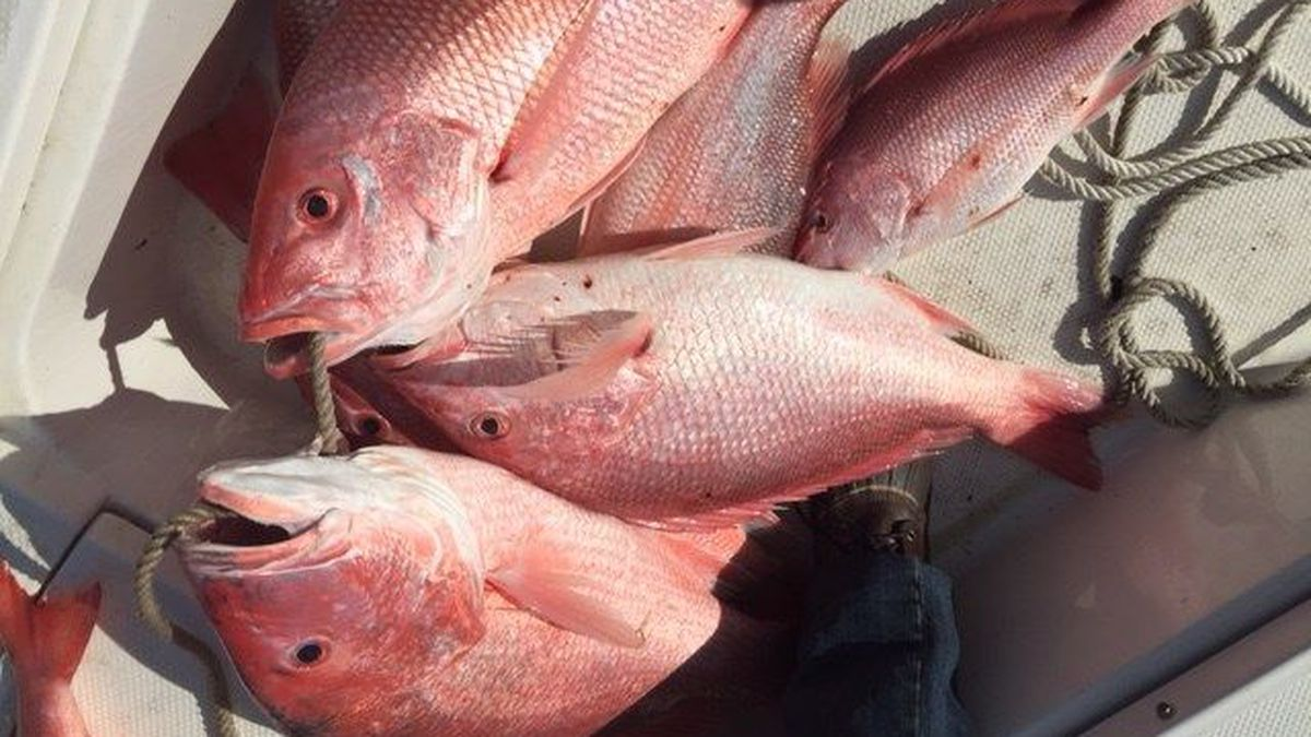 Zurik: Fed quotas, overcounting spell trouble for recreational snapper fishers