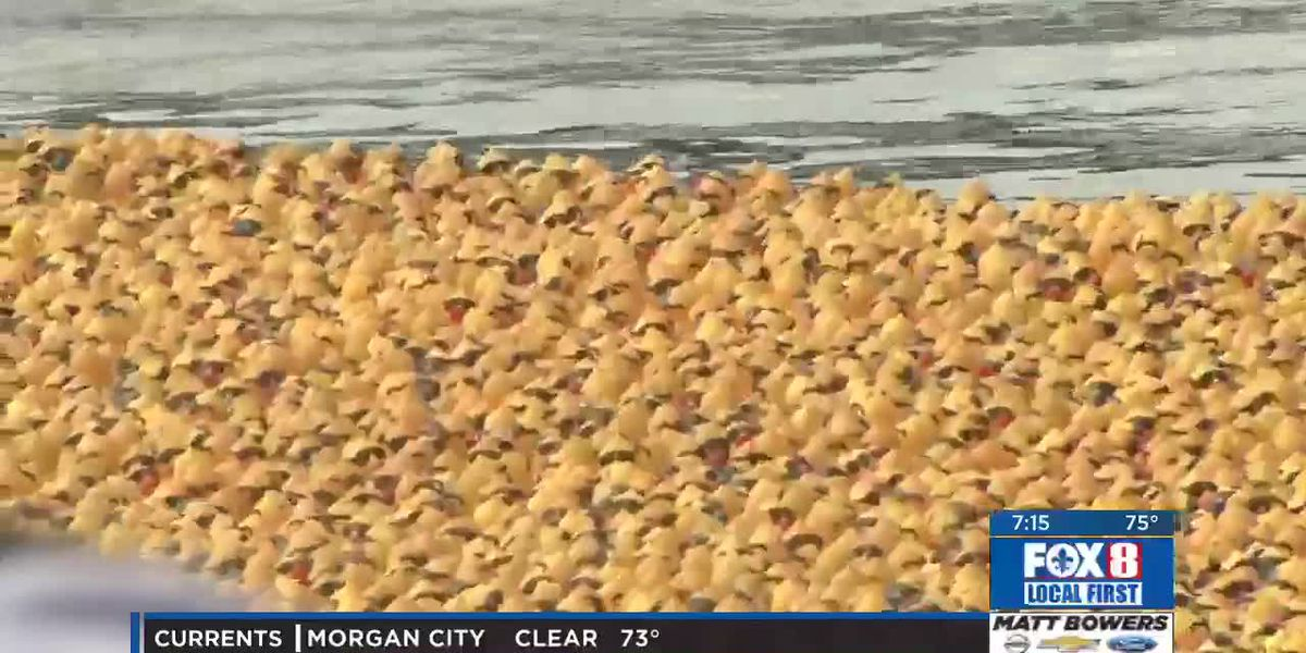 Rubber duck race to benefit Second Harvest Food Bank