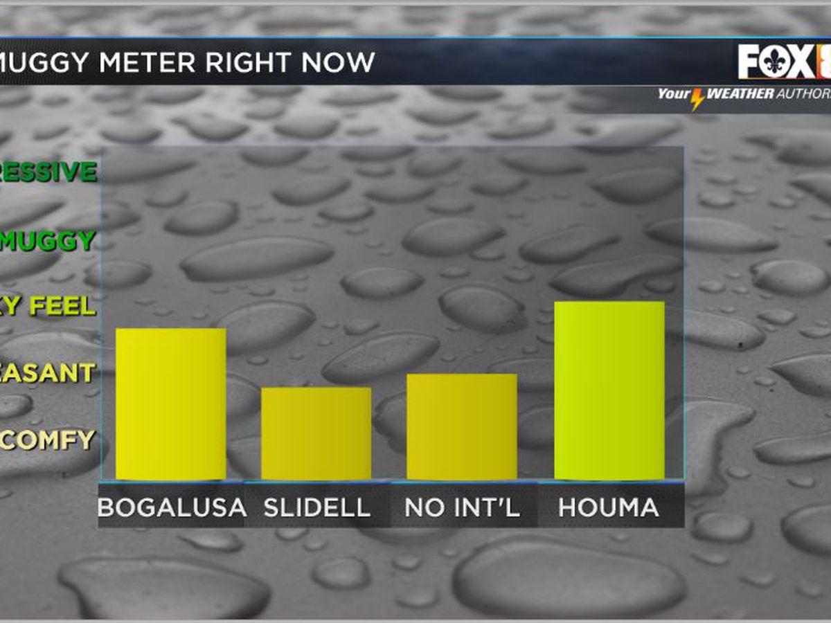 Nicondra: Humidity is back