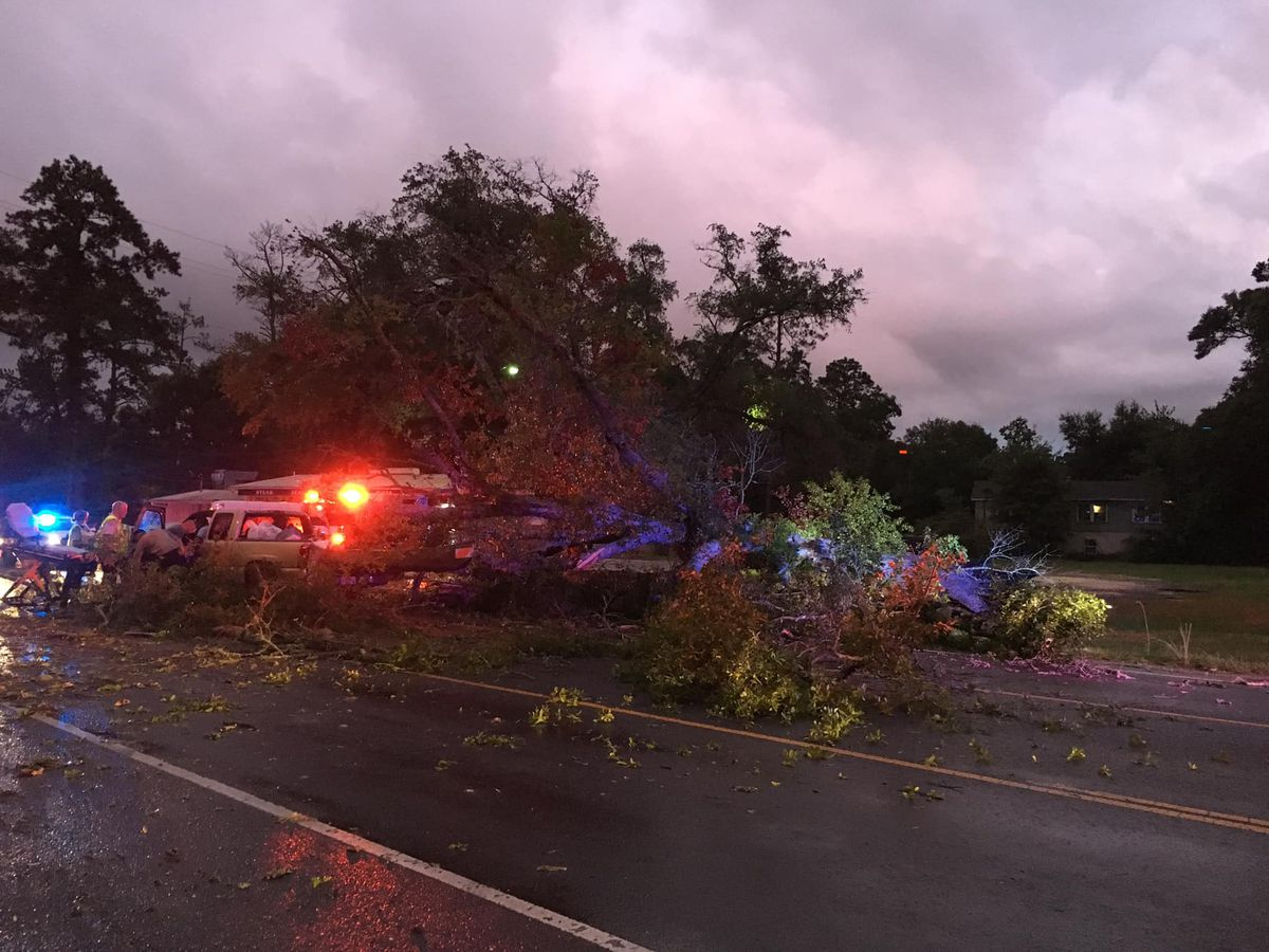 Police: Massive tree falls on vehicle, driver miraculously survives