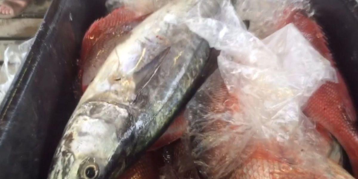 Zurik: N.O. chefs worry seafood abundance could wash away