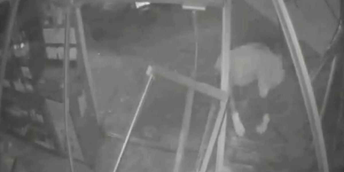 Video: Thieves pull off ATM Heist in Central City