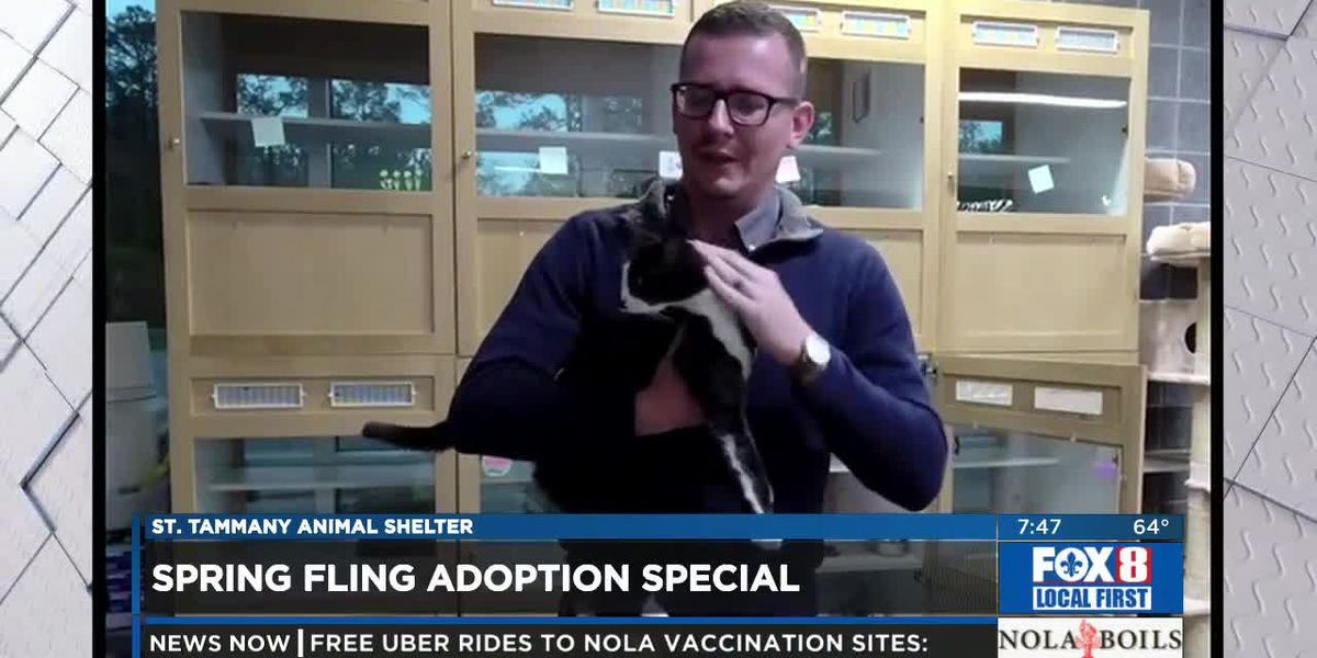 Spring Fling Adoption Special - St. Tammany Parish Animal Shelter