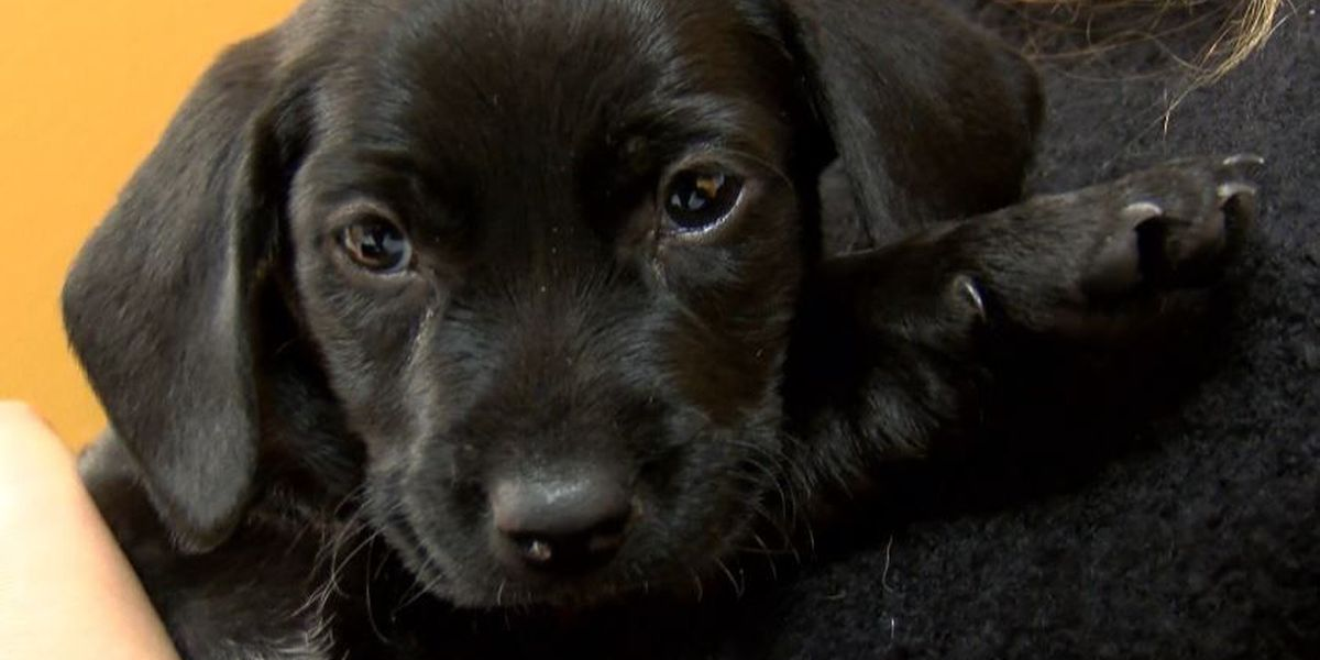 Owners who leave pets outside could face felony animal cruelty charge