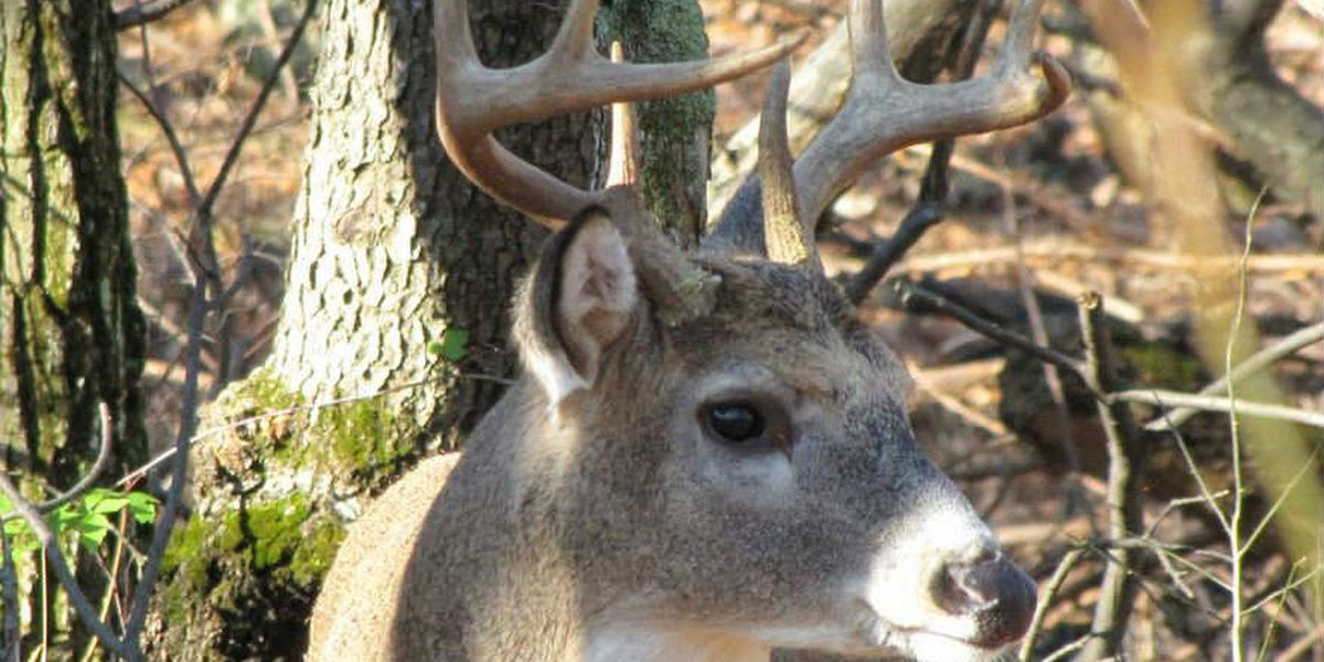 Man arrested with wet, dead deer in his boat